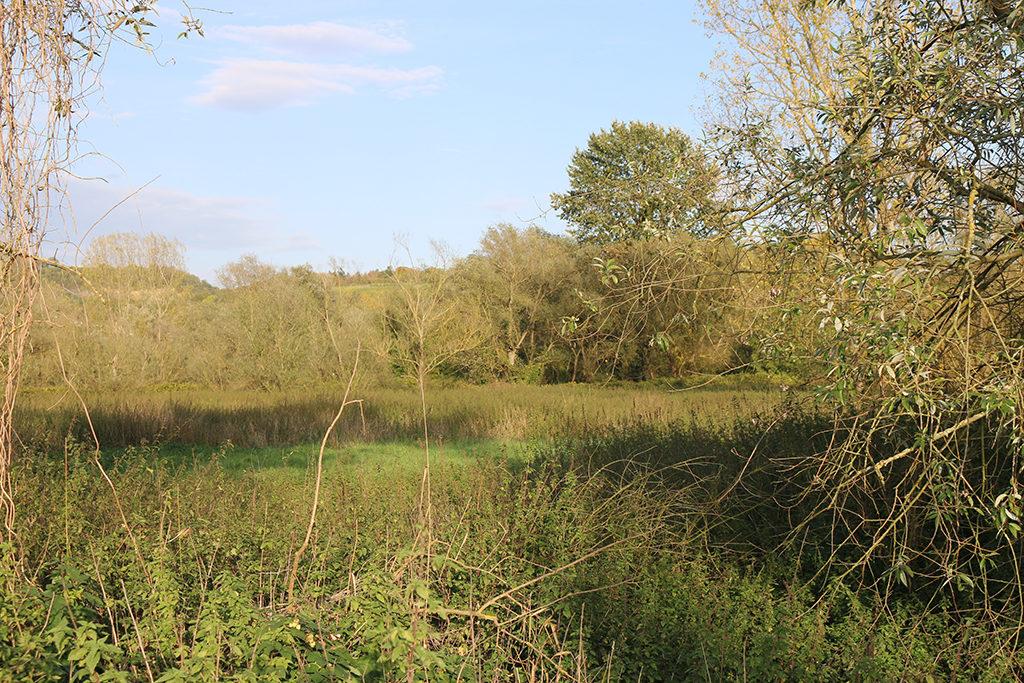 Mit einem integrtiven Ansatz soll das Gebiet der Ahrmündung für den Naturschutz, Tourismus und Landwirtschaft aufgewertet werden.