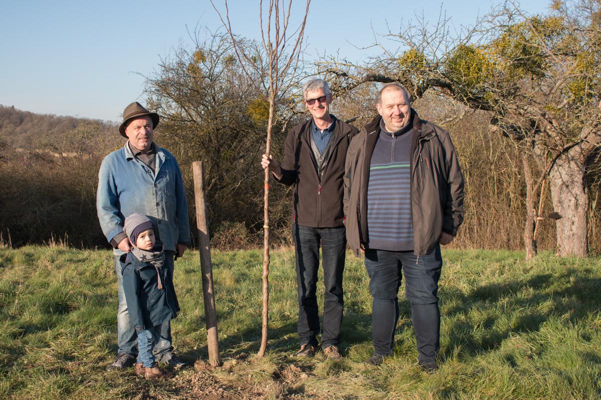 Hochstämmige Obstbäume wurden auf Initiative der Freien Wähler Sinzig jetzt in Sinzig gepflanzt